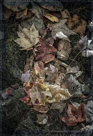 Moonlit Leaves