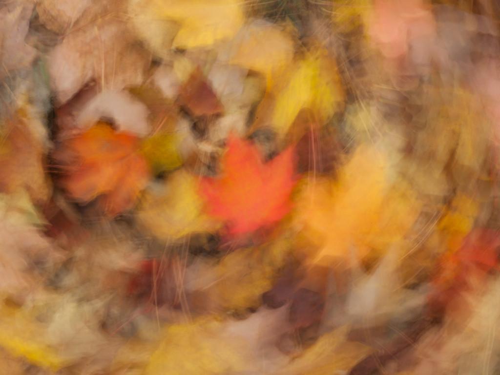 Maple Leaf Impressionism