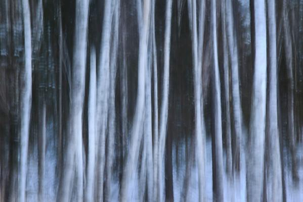 Winter Birch Abstract