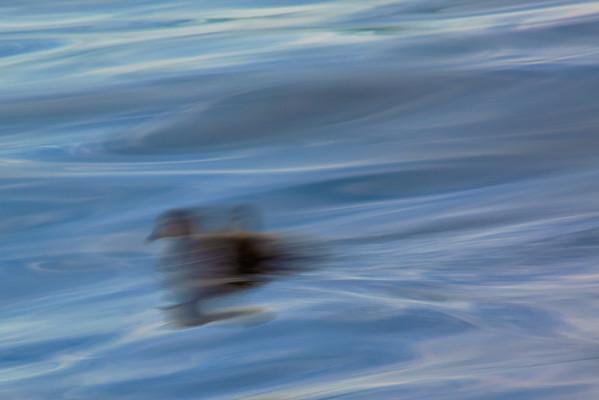Duckling's First Voyage