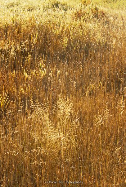 S.4277 - dew on late summer grass - backlit, Hauser Lake, Kootenai County, ID.