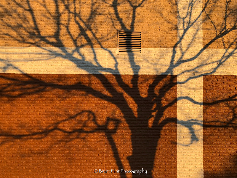 DF.4925 - Shadow of maple tree against building, Spokane Valley, WA.