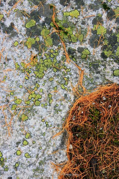 DF.601 - lichen patterns and larch needles on granite, Kaniksu National Forest, WA.