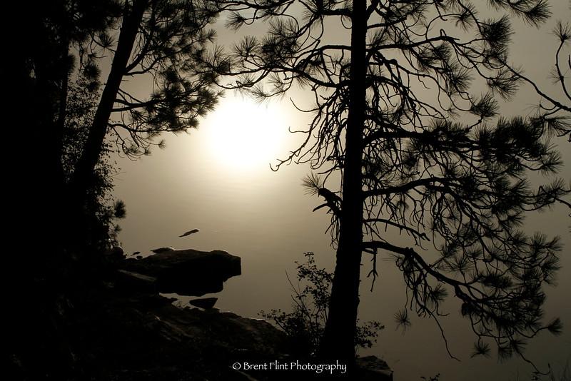 DF.3295 - silhouette of pines and shoreline, Black Bay Park,Spokane River, Kootenai County, ID.