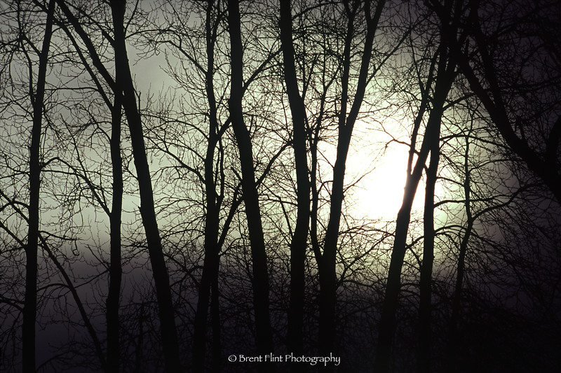 S.4777 - Sun through mist and trees, Old Mission State Park, ID.
