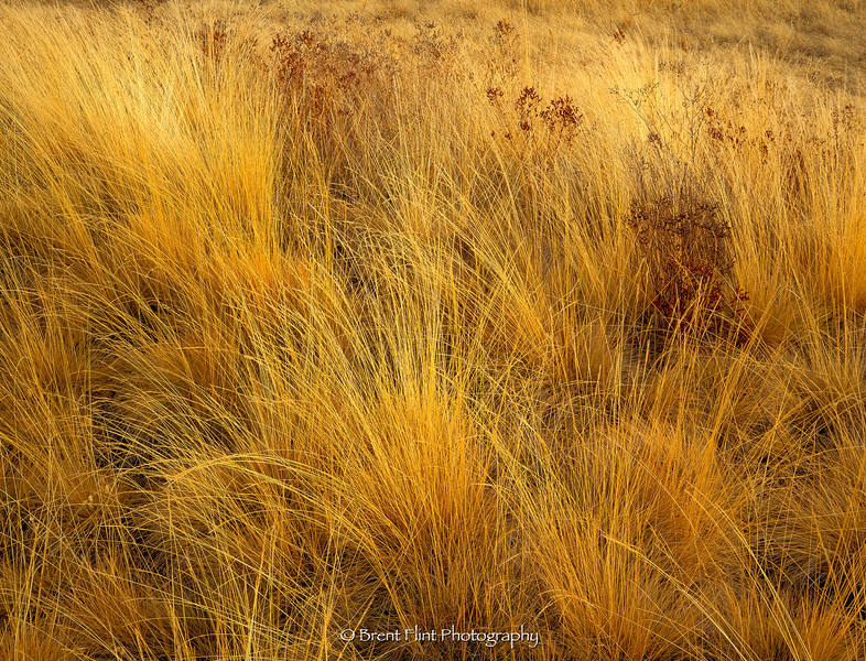 S.4508 - grasses, Turnbull National Wildlife Refuge, WA.