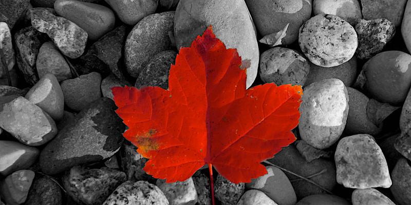 Canada's Leaf