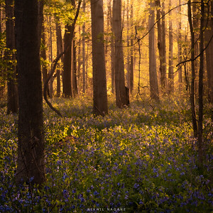 Forest Glow #1