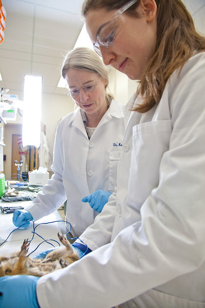 """Senior biology major Colleen Bue assists Professor Kelly Drew with her research involving hibernating ground squirrels in Drew's lab in the Irving Building.  <div class=""""ss-paypal-button"""">Filename: AAR-12-3309-25.jpg</div><div class=""""ss-paypal-button-end"""" style=""""""""></div>"""