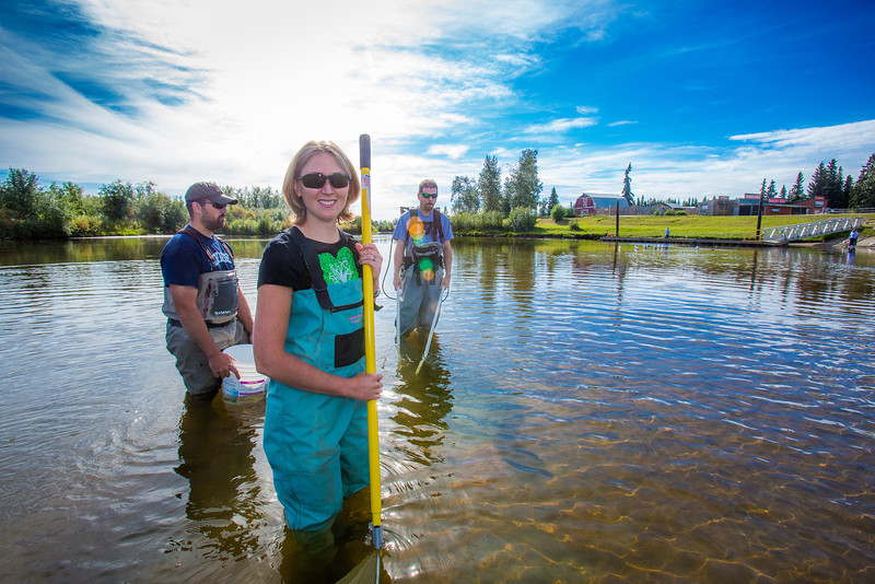 "Undergraduate Patty McCall works with Fisheries Professor Trent Sutton, right, and master's candidate Nick Smith collecting live samples from the Chena River for their research on the life dynamics of Arctic brook lampreys.  <div class=""ss-paypal-button"">Filename: AAR-12-3468-065.jpg</div><div class=""ss-paypal-button-end"" style=""""></div>"