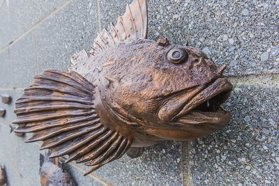 One of several realistic fish sculptures on permanent display outside UAF's Lena Point facility near Juneau, part of UAF's School of Fisheries and Ocean Sciences.  Filename: AAR-14-4058-123.jpg