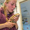 "Kate Wilsterman, a biology student at UC Berkeley, revives an anaesthetized arctic ground squirrel after she attached a radio collar before it's released back into the wild. Wilsterman helped conduct research on the squirrels at the Toolik Field Station in the summer of 2014.  <div class=""ss-paypal-button"">Filename: AAR-14-4215-45.jpg</div><div class=""ss-paypal-button-end""></div>"