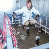 "Tom Polasek, a senior petroleum engineering major, works on constructing a simulated permafrost environment in a Duckering Building cold room. The project seeks to monitor the effects of heat from the wells and prevent the thawing of permafrost on Alaska's North Slope oil fields.  <div class=""ss-paypal-button"">Filename: AAR-14-4076-100.jpg</div><div class=""ss-paypal-button-end""></div>"