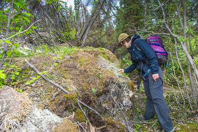 Associate professor Margaret Darrow, inspects the vegitation growing on the front toe of several frozen debris lobes which have appeared along the Dietrich River valley in the southern Brooks Range  which could threaten the highway and the nearby trans-Alaska pipeline.  Filename: AAR-14-4214-410.jpg