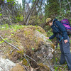 "Associate professor Margaret Darrow, inspects the vegitation growing on the front toe of several frozen debris lobes which have appeared along the Dietrich River valley in the southern Brooks Range  which could threaten the highway and the nearby trans-Alaska pipeline.  <div class=""ss-paypal-button"">Filename: AAR-14-4214-410.jpg</div><div class=""ss-paypal-button-end""></div>"