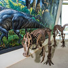 """A mounted dinosaur skeleton display of Ugrunaaluk kuukpikensis, an arctic duck-billed hadrosaur, stands near the entrance of the University of Alaska Museum of the North.  <div class=""""ss-paypal-button"""">Filename: AAR-16-4890-105.jpg</div><div class=""""ss-paypal-button-end""""></div>"""