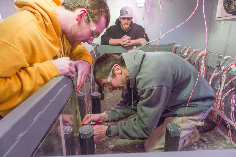 """Petroleum engineering students Tom Polasek, on knees, Justin Calkins, left, and Brett Martino build a permafrost simulation chamber in a Duckering Building lab. The project seeks to monitor the effects of heat from the wells and prevent the thawing of permafrost on Alaska's North Slope oil fields.  <div class=""""ss-paypal-button"""">Filename: AAR-14-4076-8.jpg</div><div class=""""ss-paypal-button-end""""></div>"""