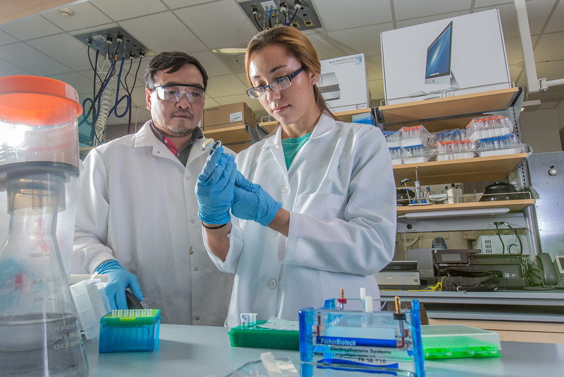 """Associate professor Jack Chen looks on as senior engineering major Shanann Hoyos performs gel electrophoresis to check results from a polymerase chain reaction assay in the Murie Building virology lab.  <div class=""""ss-paypal-button"""">Filename: AAR-13-3989-84.jpg</div><div class=""""ss-paypal-button-end"""" style=""""""""></div>"""