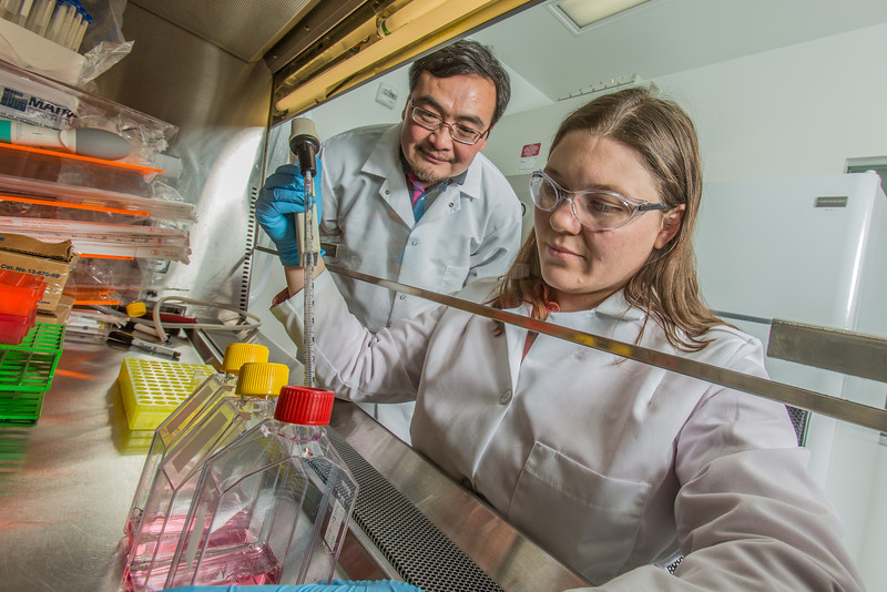 """Associate professor Jack Chen looks on as Ph.D. candidate Jayme Parker performs a virological assay in the safety cabinet inside the virology lab in the Murie Building.  <div class=""""ss-paypal-button"""">Filename: AAR-13-3989-43.jpg</div><div class=""""ss-paypal-button-end"""" style=""""""""></div>"""