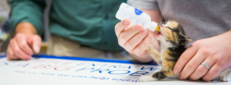 """Veterinary Medicine student Christopher Clement feeds a kitten during his internship at the Sitka Animal Hospital.  <div class=""""ss-paypal-button"""">Filename: AAR-14-4206-23.jpg</div><div class=""""ss-paypal-button-end""""></div>"""