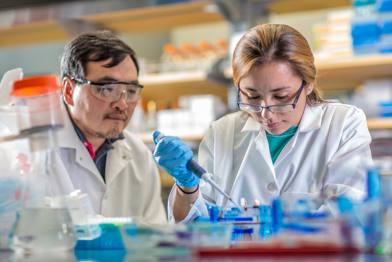 "Associate professor Jack Chen looks on as senior engineering major Shanann Hoyos performs gel electrophoresis to check results from a polymerase chain reaction assay in the Murie Building virology lab.  <div class=""ss-paypal-button"">Filename: AAR-13-3989-122.jpg</div><div class=""ss-paypal-button-end"" style=""""></div>"