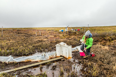 Kelsey Blake, a graduate student from the University of Victoria in British Columbia, collects water samples from a research site near the headwaters of the Kuparuk River on Alaska's North Slope.  Filename: AAR-14-4217-052.jpg