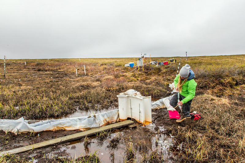 "Kelsey Blake, a graduate student from the University of Victoria in British Columbia, collects water samples from a research site near the headwaters of the Kuparuk River on Alaska's North Slope.  <div class=""ss-paypal-button"">Filename: AAR-14-4217-052.jpg</div><div class=""ss-paypal-button-end""></div>"