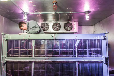 Petroleum engineering student Tom Polasek builds a permafrost simulation chamber in a Duckering Building lab. The project seeks to monitor the effects of heat from the wells and prevent the thawing of permafrost on Alaska's North Slope oil fields.  Filename: AAR-14-4076-27.jpg