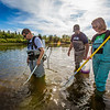 "Fisheries professor Trent Sutton, left, works with master's candidate Nick Smith and undergraduate Patty McCall collecting live samples from the Chena River for their research on the life dynamics of Arctic brook lampreys.  <div class=""ss-paypal-button"">Filename: AAR-12-3468-028.jpg</div><div class=""ss-paypal-button-end"" style=""""></div>"