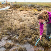 "Ludda Ludwig, a Ph.D. candidate with UAF's College of Natural Science and Mathematics, collects water samples from a research site near the headwaters of the Kuparuk River on Alaska's North Slope.  <div class=""ss-paypal-button"">Filename: AAR-14-4217-066.jpg</div><div class=""ss-paypal-button-end""></div>"