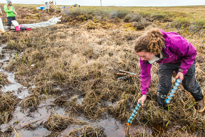 """Ludda Ludwig, a Ph.D. candidate with UAF's College of Natural Science and Mathematics, collects water samples from a research site near the headwaters of the Kuparuk River on Alaska's North Slope.  <div class=""""ss-paypal-button"""">Filename: AAR-14-4217-066.jpg</div><div class=""""ss-paypal-button-end""""></div>"""
