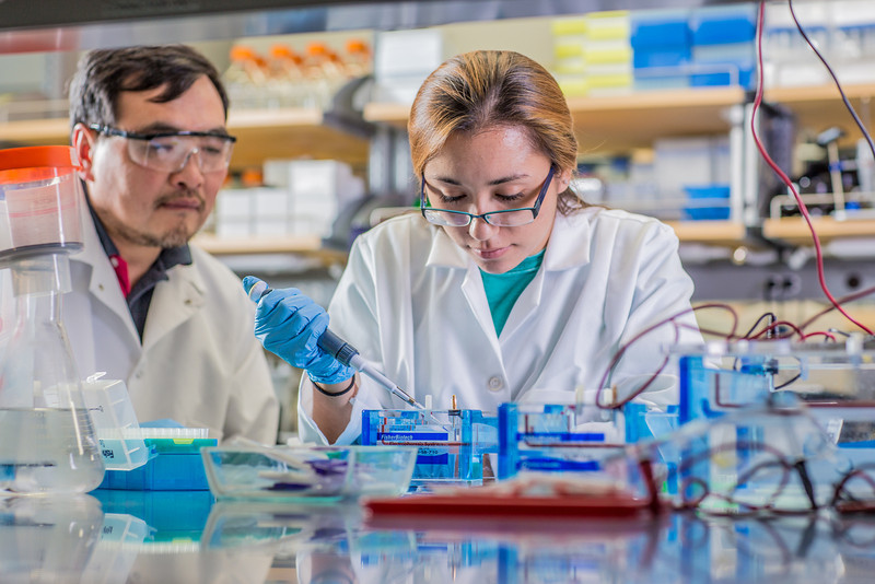 "Associate professor Jack Chen looks on as senior engineering major Shanann Hoyos performs gel electrophoresis to check results from a polymerase chain reaction assay in the Murie Building virology lab.  <div class=""ss-paypal-button"">Filename: AAR-13-3989-116.jpg</div><div class=""ss-paypal-button-end"" style=""""></div>"