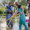 "Undergraduate Patty McCall, center, works with Fisheries Professor Trent Sutton, left, and master's candidate Nick Smith collecting live samples from the Chena River for their research on the life dynamics of Arctic brook lampreys.  <div class=""ss-paypal-button"">Filename: AAR-12-3468-011.jpg</div><div class=""ss-paypal-button-end"" style=""""></div>"