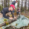 "Shalane Frost, left, Karl Olson and Jamie Hollingsworth with UAF's Institute of Arctic Biology inspect and prepare permafrost core samples for transport back to the lab during a day trip into the Bonanza Creek Long-Term Ecological Research area about 25 miles southwest of Fairbanks along a slough of the Tanana River.  <div class=""ss-paypal-button"">Filename: AAR-15-4535- 237.jpg</div><div class=""ss-paypal-button-end""></div>"