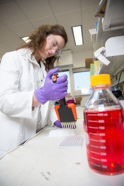 "Alyssa Komac uses a pipette in her research involving the metabolism in Alaska sled dogs.  <div class=""ss-paypal-button"">Filename: AAR-12-3673-8.jpg</div><div class=""ss-paypal-button-end"" style=""""></div>"