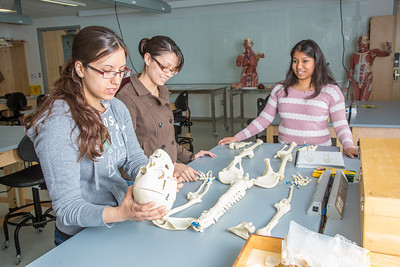 Undergraduates Heather Bruhn, left, and Michelle Negrete work with teaching assistant Sophie Chowdhury during their summer sessions anatomy and physiology lab in the Murie Building.  Filename: AAR-13-3856-89.jpg