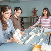 "Undergraduates Heather Bruhn, left, and Michelle Negrete work with teaching assistant Sophie Chowdhury during their summer sessions anatomy and physiology lab in the Murie Building.  <div class=""ss-paypal-button"">Filename: AAR-13-3856-89.jpg</div><div class=""ss-paypal-button-end"" style=""""></div>"