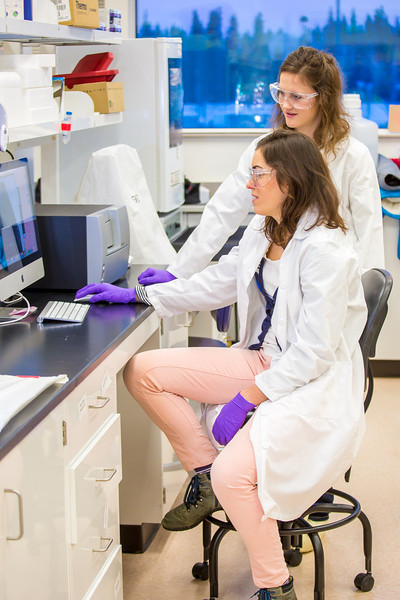 """Undergraduate Alyssa Komac, right, and graduate student Theresia Schnurr study the data they're getting in their research involving the metabolism in Alaska sled dogs.  <div class=""""ss-paypal-button"""">Filename: AAR-12-3673-111.jpg</div><div class=""""ss-paypal-button-end"""" style=""""""""></div>"""