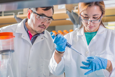 Associate professor Jack Chen looks on as senior engineering major Shanann Hoyos performs gel electrophoresis to check results from a polymerase chain reaction assay in the Murie Building virology lab.  Filename: AAR-13-3989-97.jpg