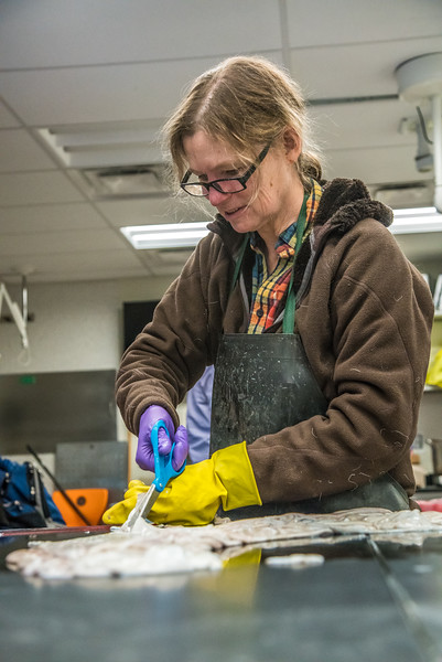 """Community members take a class on treating and making products with local reindeer hides at UAF's Northwest Campus in Nome.  <div class=""""ss-paypal-button"""">Filename: AAR-16-4865-473.jpg</div><div class=""""ss-paypal-button-end""""></div>"""