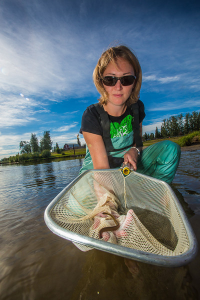"""Fisheries undergraduate student Patty McCall collect samples from the Chena River for a  research project on the life dynamics of Arctic brook lampreys.  <div class=""""ss-paypal-button"""">Filename: AAR-12-3468-058.jpg</div><div class=""""ss-paypal-button-end"""" style=""""""""></div>"""
