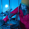 """Sophomore Tiffany Green inspects crystal formations in a thin slice of ice in the Elvey Building """"Cold Room"""" during a lab exercise in her Ice in Climate Systems class.  <div class=""""ss-paypal-button"""">Filename: AAR-12-3330-097.jpg</div><div class=""""ss-paypal-button-end"""" style=""""""""></div>"""
