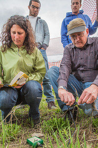 Amanda Byrd, a research technician with the Alaska Center for Energy and Power, works with Steven Sparrow, dean of UAF's College of Natural Resources and Agricultural Sciences, to collect data on a plot of willows being grown on the experiment farm to study their potential use as a source of biofuel. A group of ACEP interns look on.  Filename: AAR-13-3853-13.jpg