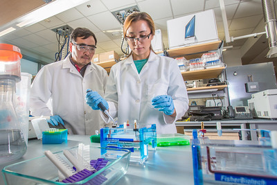 Associate professor Jack Chen looks on as senior engineering major Shanann Hoyos performs gel electrophoresis to check results from a polymerase chain reaction assay in the Murie Building virology lab.  Filename: AAR-13-3989-88.jpg
