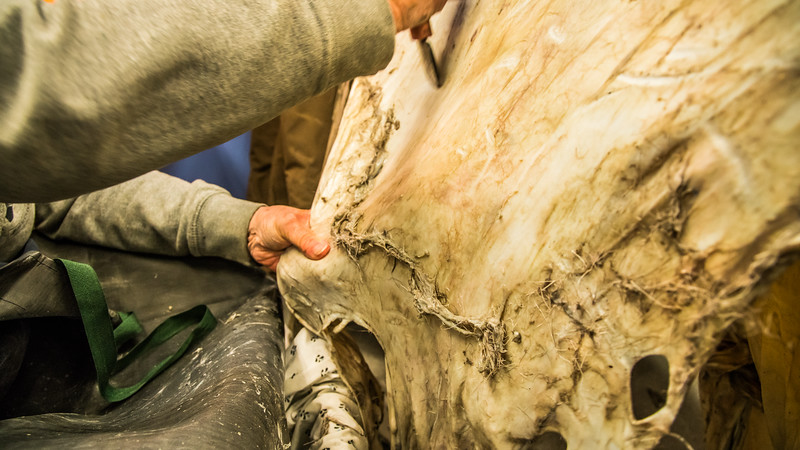 """Community members take a class on treating and making products with local reindeer hides at UAF's Northwest Campus in Nome.  <div class=""""ss-paypal-button"""">Filename: AAR-16-4865-462.jpg</div><div class=""""ss-paypal-button-end""""></div>"""