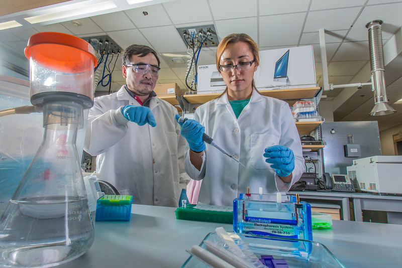 "Associate professor Jack Chen looks on as senior engineering major Shanann Hoyos performs gel electrophoresis to check results from a polymerase chain reaction assay in the Murie Building virology lab.  <div class=""ss-paypal-button"">Filename: AAR-13-3989-86.jpg</div><div class=""ss-paypal-button-end"" style=""""></div>"