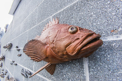 One of several realistic fish sculptures on permanent display outside UAF's Lena Point facility near Juneau, part of UAF's School of Fisheries and Ocean Sciences.  Filename: AAR-14-4058-113.jpg