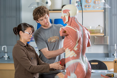 Michelle Negrete and Walter Hafner complete a procedure during their summer sessions anatomy and physiology lab in the Murie Building.  Filename: AAR-13-3856-54.jpg