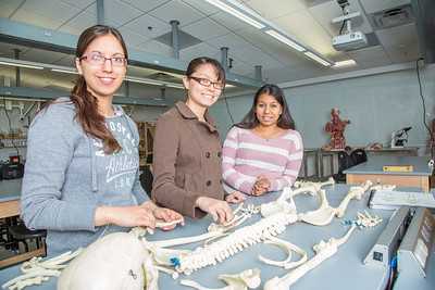 Undergraduates Heather Bruhn, left, and Michelle Negrete work with teaching assistant Sophie Chowdhury during their summer sessions anatomy and physiology lab in the Murie Building.  Filename: AAR-13-3856-102.jpg