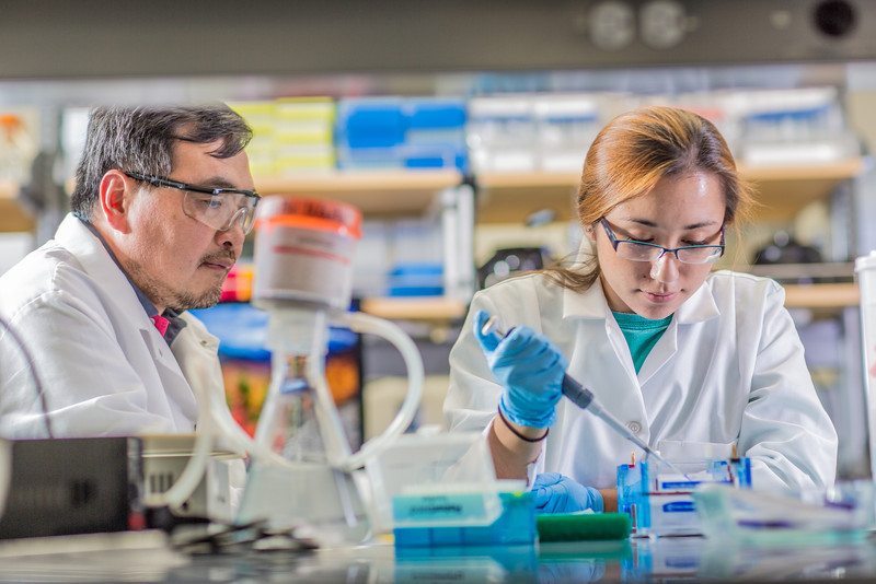 """Associate professor Jack Chen looks on as senior engineering major Shanann Hoyos performs gel electrophoresis to check results from a polymerase chain reaction assay in the Murie Building virology lab.  <div class=""""ss-paypal-button"""">Filename: AAR-13-3989-129.jpg</div><div class=""""ss-paypal-button-end"""" style=""""""""></div>"""